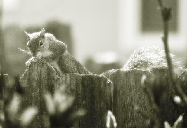 Sneaky Peek/Photography