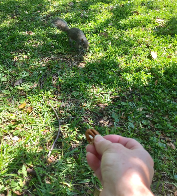 Lunch time fun time with squirrels, FL
