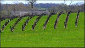 Fields in Nebraska