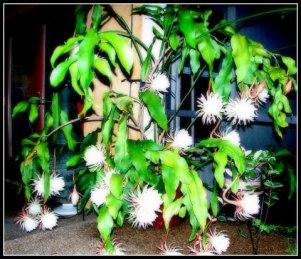 My night Cerrus plant. I miss you. 😔