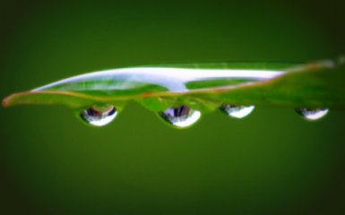 Morning dewdrops