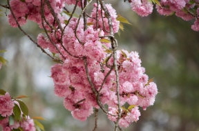 Not sure what this tree bloom is. But I love it!
