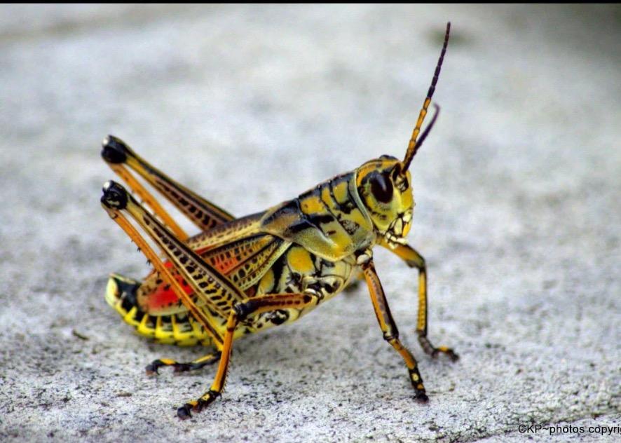 Bug Off! #SoCS