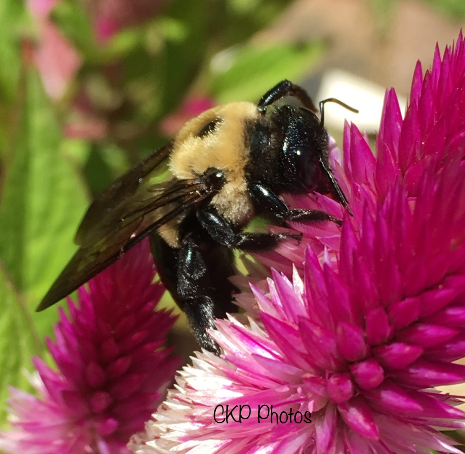 The Bee and Me/Photography/Poetry
