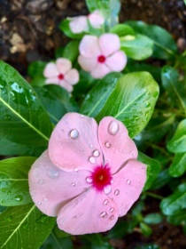 Saturday showers mean Sunday dewdrops