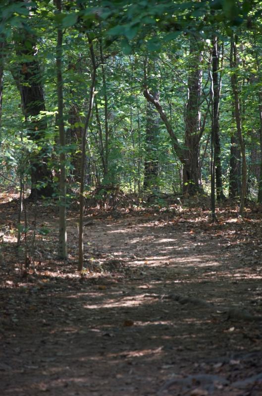 Shadowy Path at Sope Creek