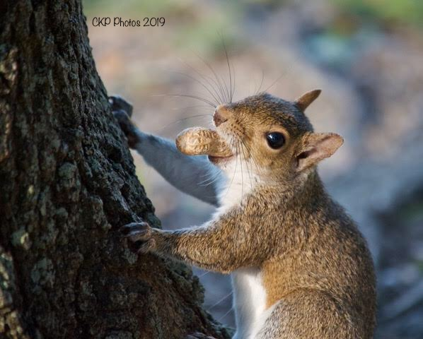 Awww…Nuts!