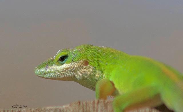 Lizardry