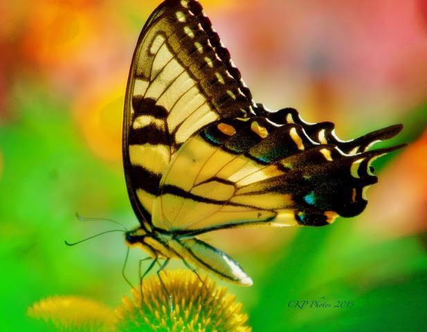 Exquisite #photography
