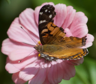 Broken Butterflies